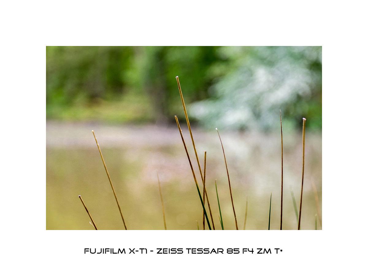 Fuji X-T1 - Zeiss Tessar 85mm f4 ZM